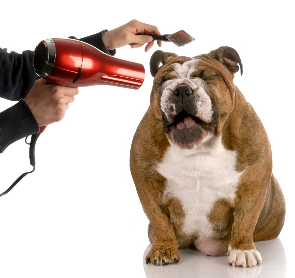 Best Dog Grooming Brushes