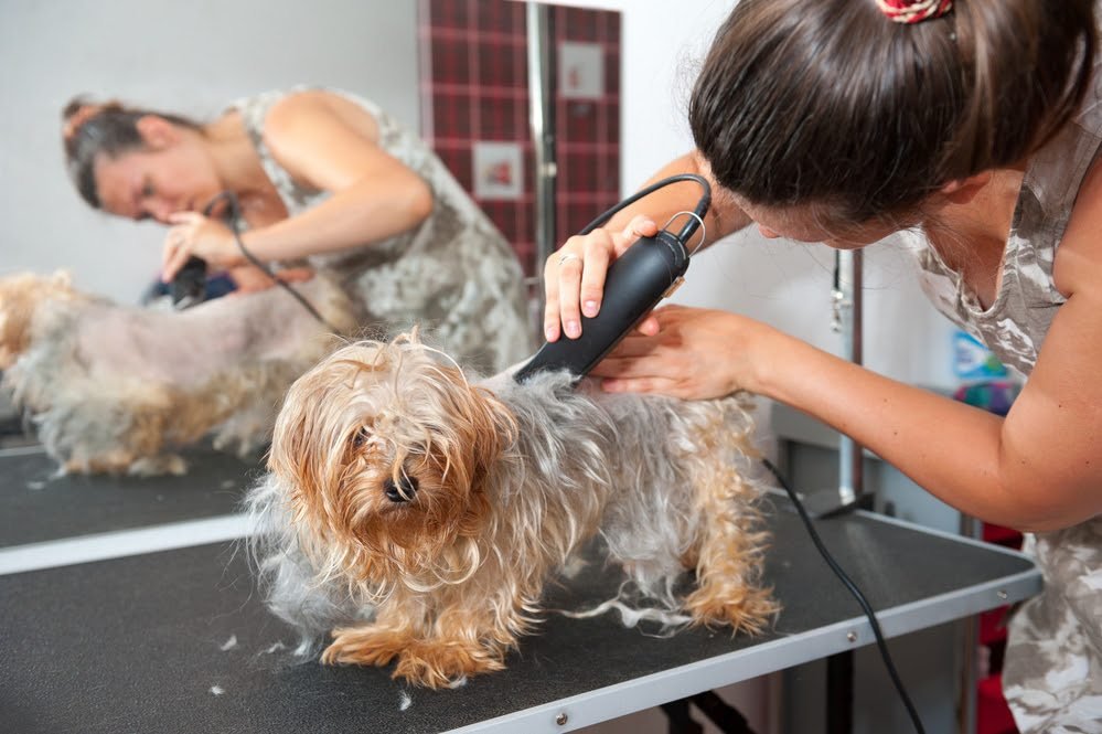 How To Groom A Dog With Clippers