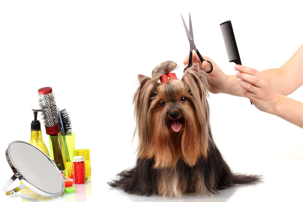 best dog combs