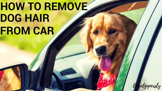 How to Remove Dog Hair from Car Seats